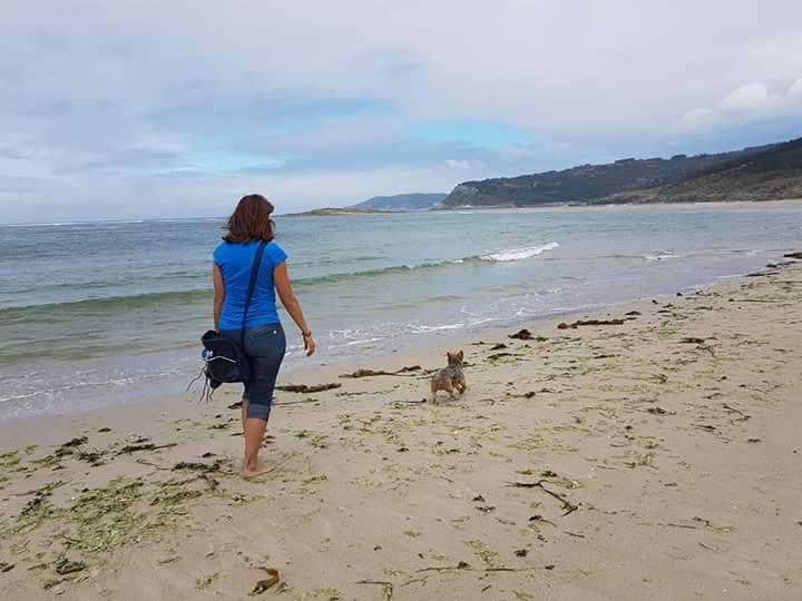 @yorkshire terrier- Caminando en la playa contigo. caminar sin correa. Jugando en la playa con tu yorki. Tu perro sin correa en la playa