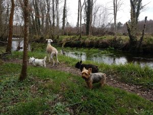 @yorkshire terrier en el bosque con amigos. yorki en el bosque