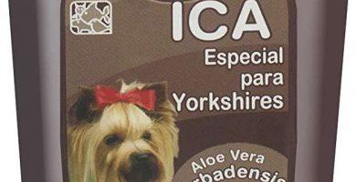Champú con Aloe Vera para Yorkshire Terrier ph neutro super concentrado