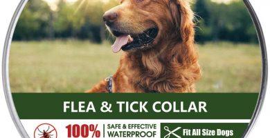 Collar Antiparasitos para Perro,Gato Pequeño Mediano Grandes contra Pulgas, Garrapatas y Mosquitos, 8 Meses