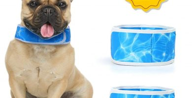 Collar Refrigerante Perro (dos unidades)