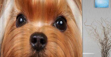 Cortina de baño Repelente al Agua,Retrato de la Hermosa Yorkshire Terrier con pestañas largas