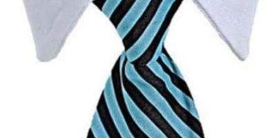 Corbata para tu Yorkshire