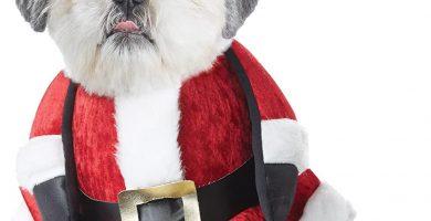 Disfraz de Papa Noel para tu yorkshire
