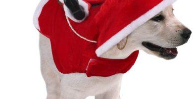 Papa Noel montado en tu Yorki