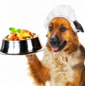 Dieta Barf dieta natural para todos los perros dieta natural dieta barf para yorkshire terrier