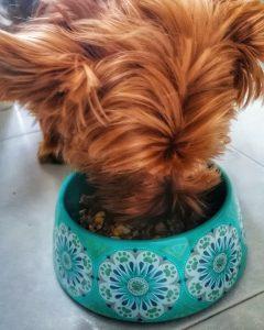 dieta natural para perros con insuficiencia renal